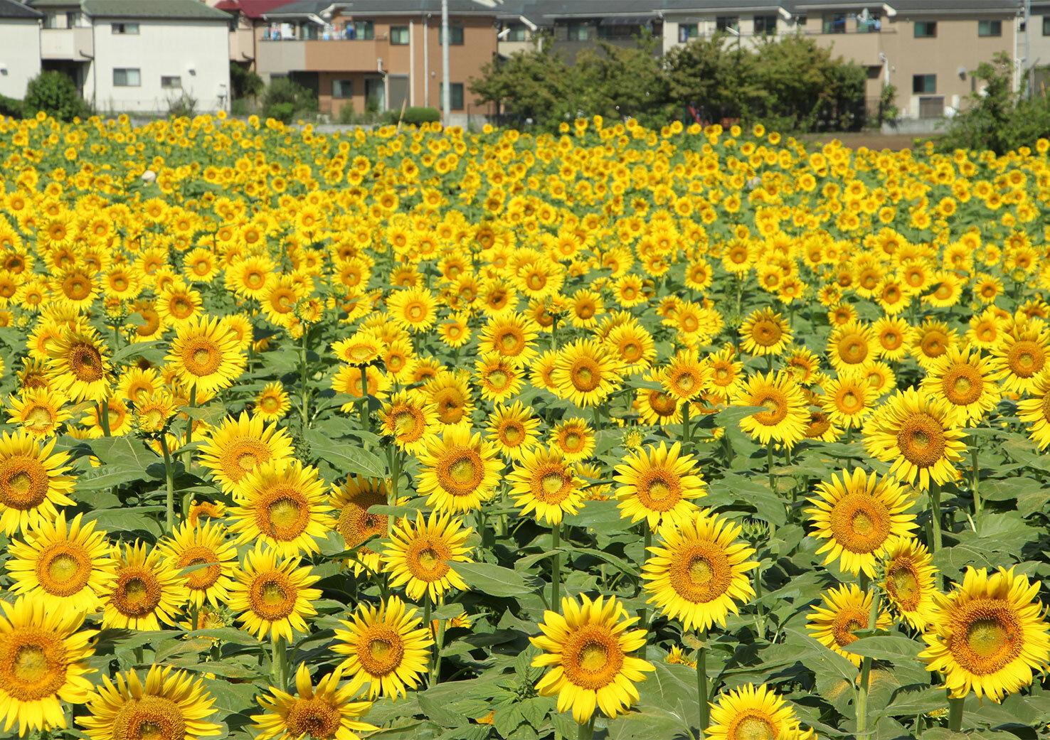 清瀬市―東京の郊外にある広大な農地と豊かな森林