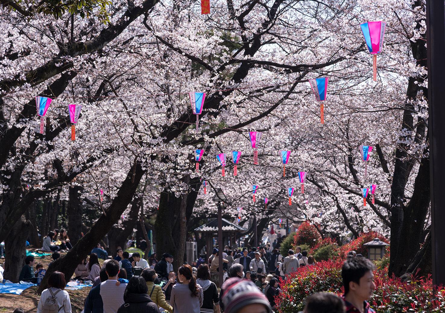 東京都内のおすすめのお花見スポット!