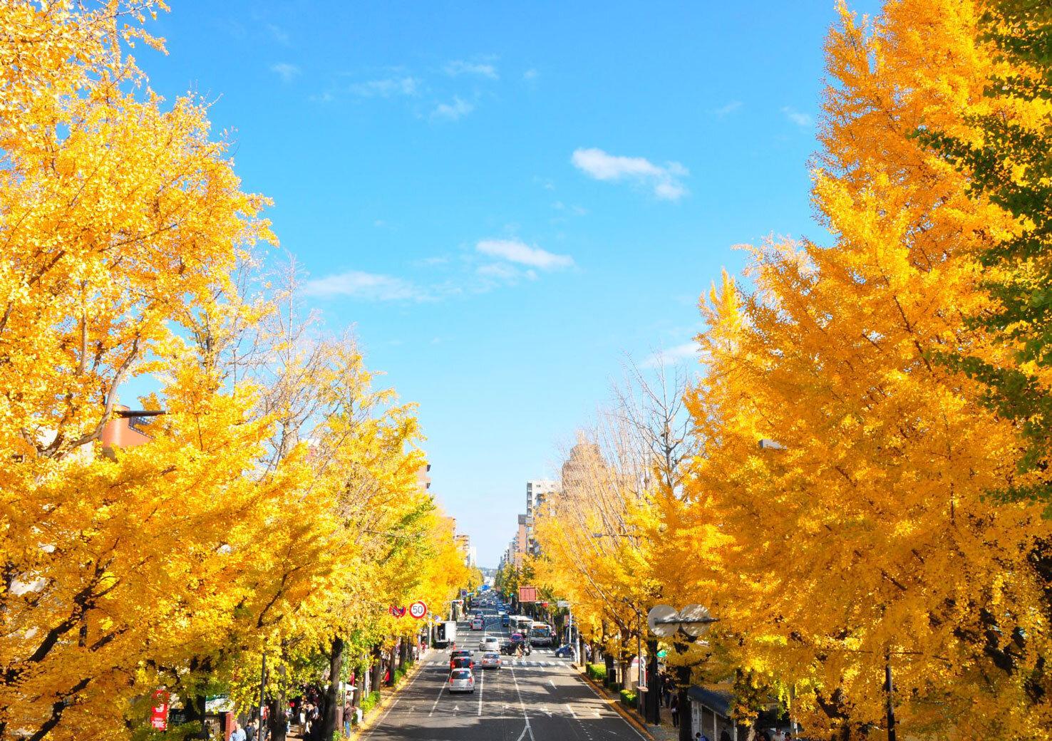 東京の秋を安心・安全に満喫 「第41回八王子いちょう祭り」